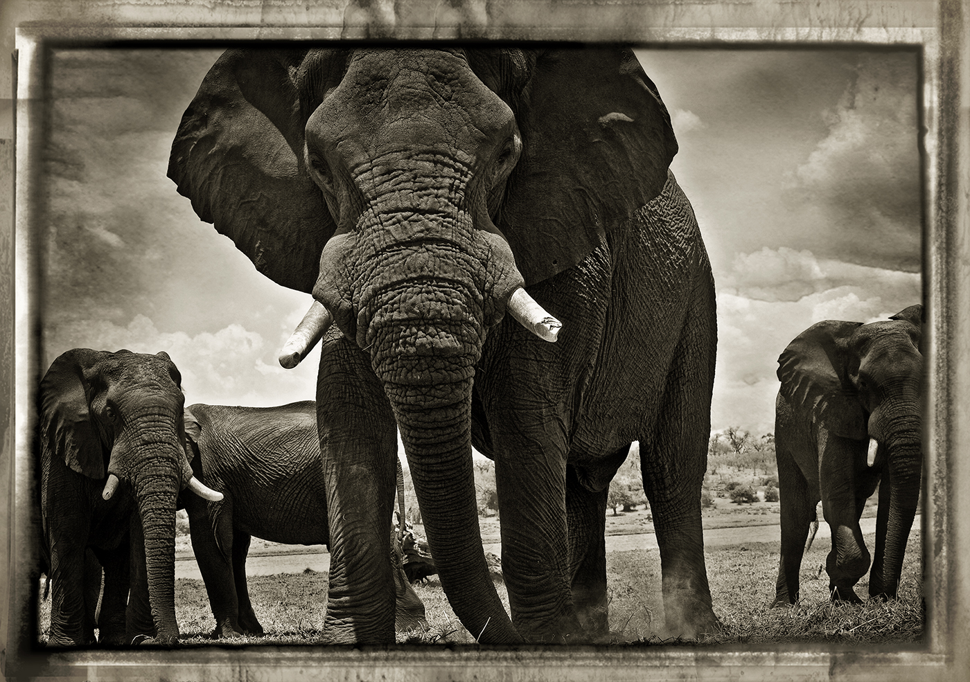Elefantes en Chobe