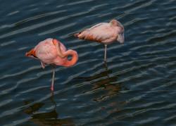 dos flamingos web