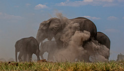 Elefantes y Polvo