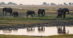 Elefantes y Reflejo