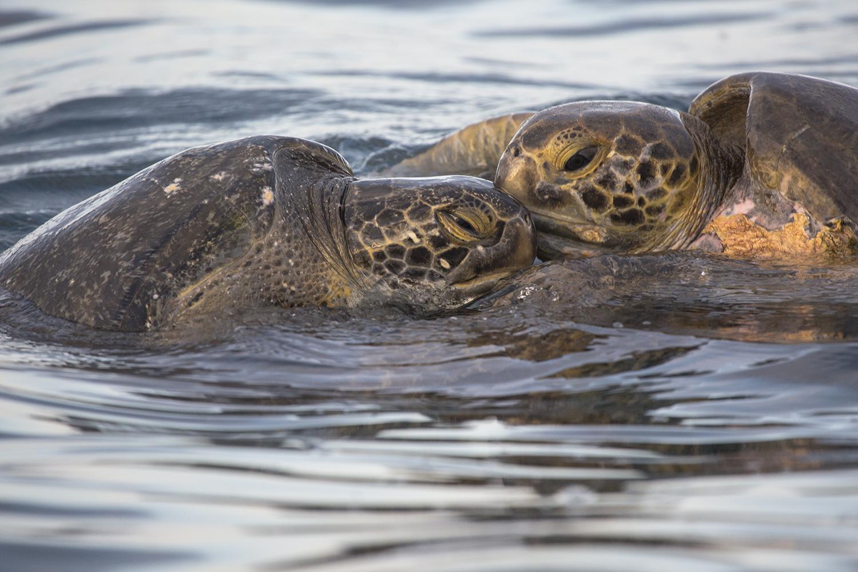 Tortugas marinas web