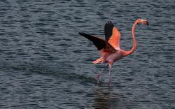 Flamingo llegando web