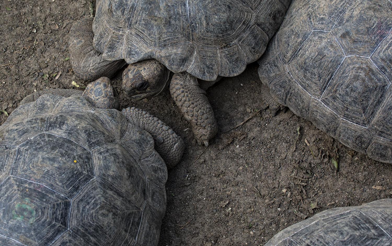 Tortugas 7 web