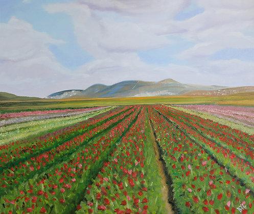 Flower Fields of the Galilee