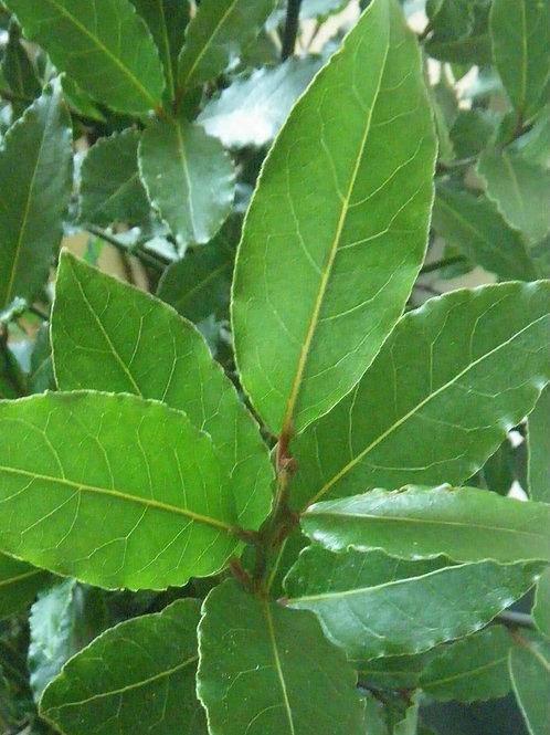 Bay Leaf (Rum)