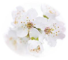 memorial service flowers.jpg