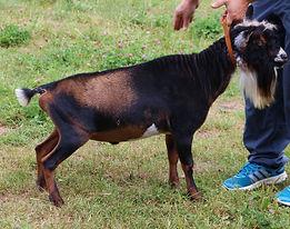 Goats 030.JPG