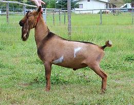Goats%20051_edited.jpg