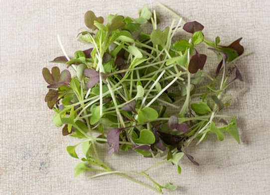 Spicy Microgreens