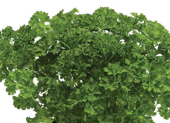 Curly Leaf Parsley (Peterselie)