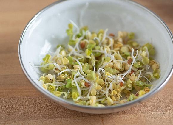 Mild Radish Sprouts