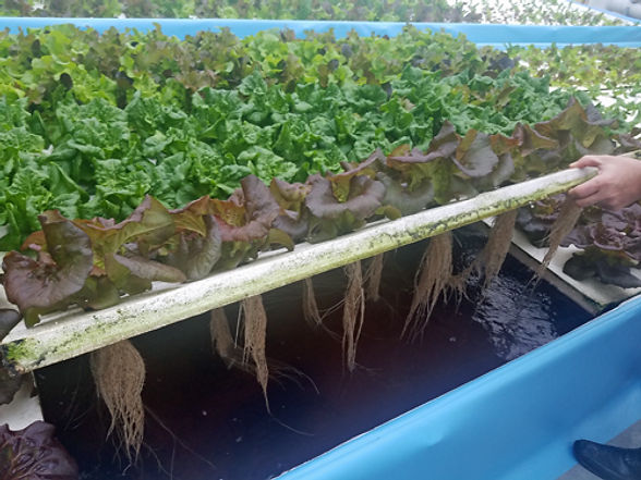 plant raft.jpg