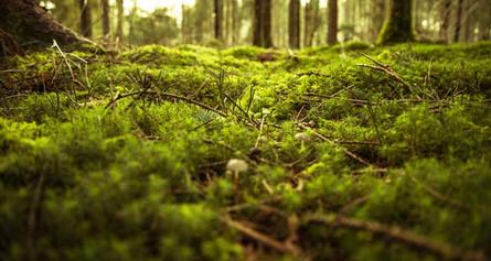 Ce que nous offre la nature