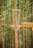treetop 2.tiff