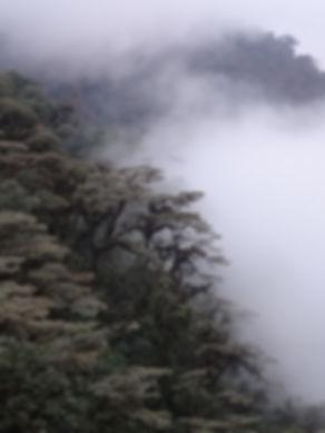Cloud forest Mindo 2.JPG
