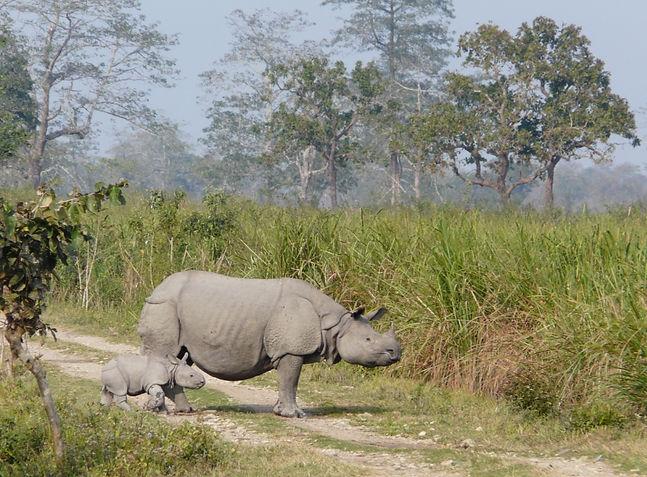 rhino © Damien PAMBUR