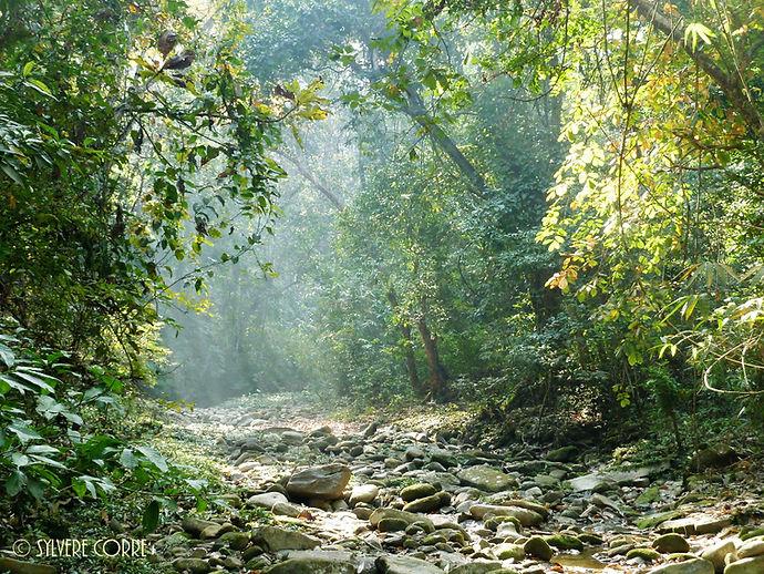 Collines de Chitwan.JPG