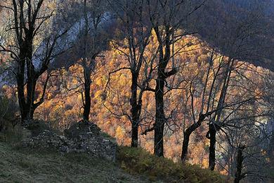 hêtres © JM Fumeau Flickr