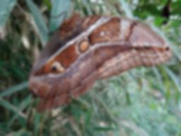 Insecte 4.JPG