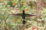 Col Colibri inca 4.JPG