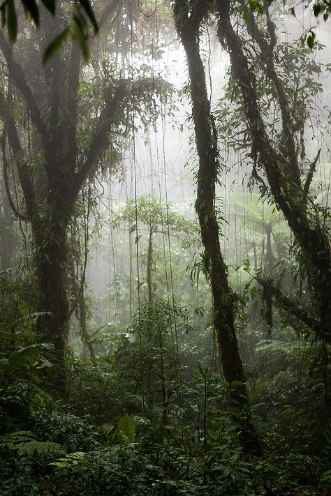 Santa Elena cloud forest © Ben Haeringer