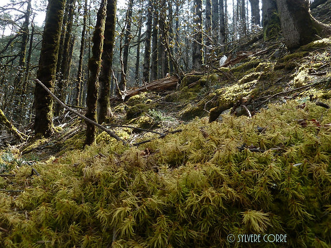 Forêt himalayenne à 2800 mètres.JPG