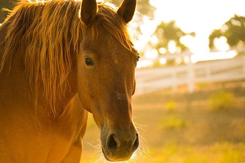 Liebst du dein Pferd?