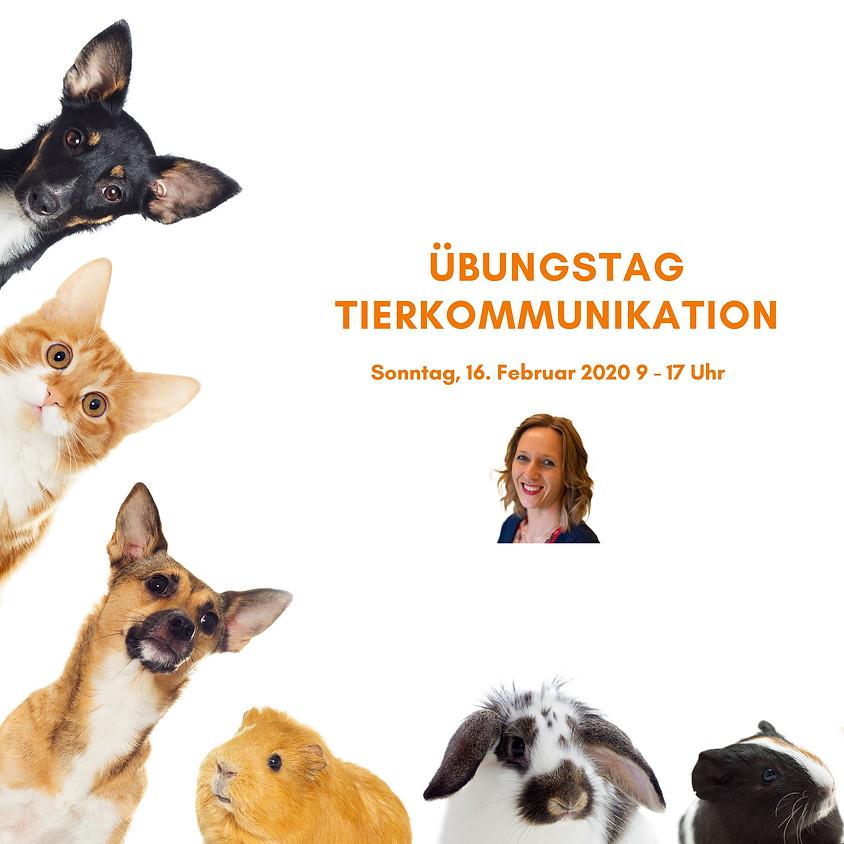 Übungstag Tierkommunikation