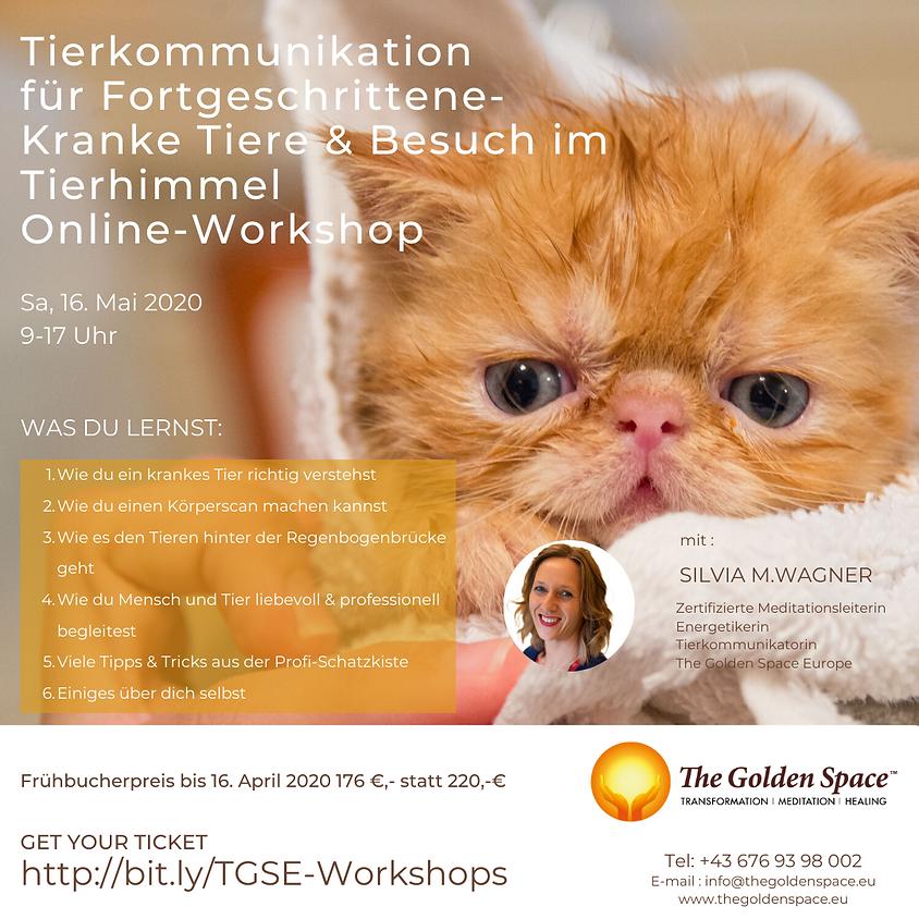 Tierkommunikation für Fortgeschrittene - Online Workshop