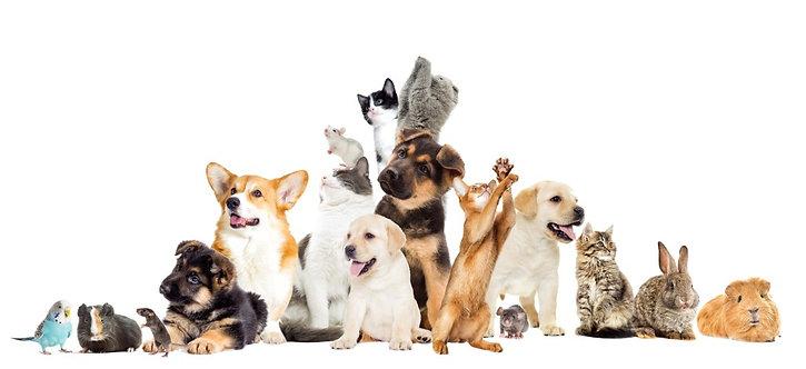 Tierkommunikation - Animal communication
