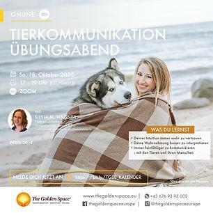 Erweitere deine Fähigkeiten in der Tierkommunikation
