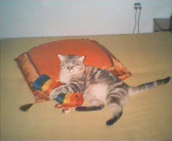 פיסטוק, בהשתלטות עוינת על מיטת ההורים שלי