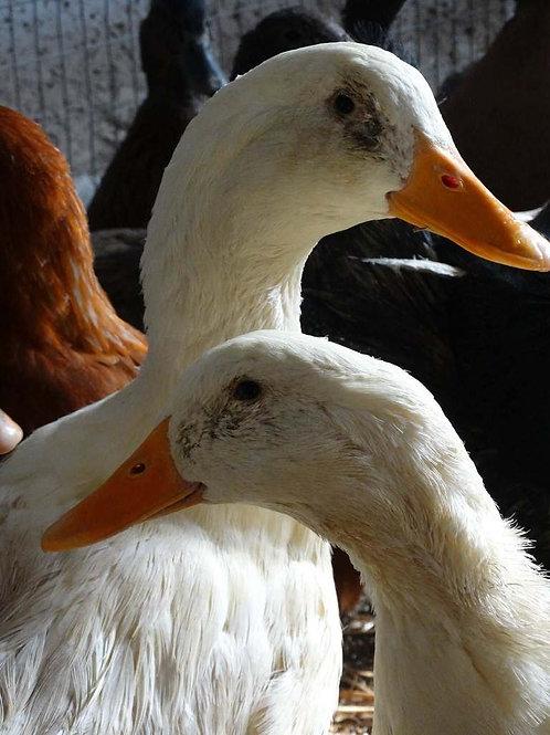 Whole Goose