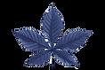 Chestnut-leaf%2520(1)_edited_edited.png