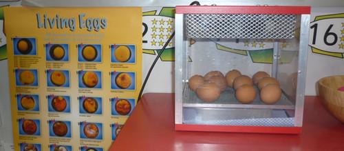 Living Eggs
