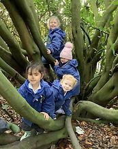 pupils in tree