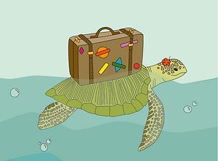tortugas conanp.png