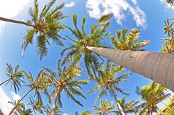 Palm Trees of Anakena Beach