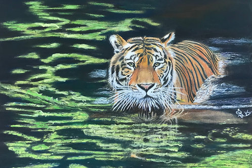 The tiger in the pond