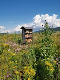 Insektenhotel.jpeg