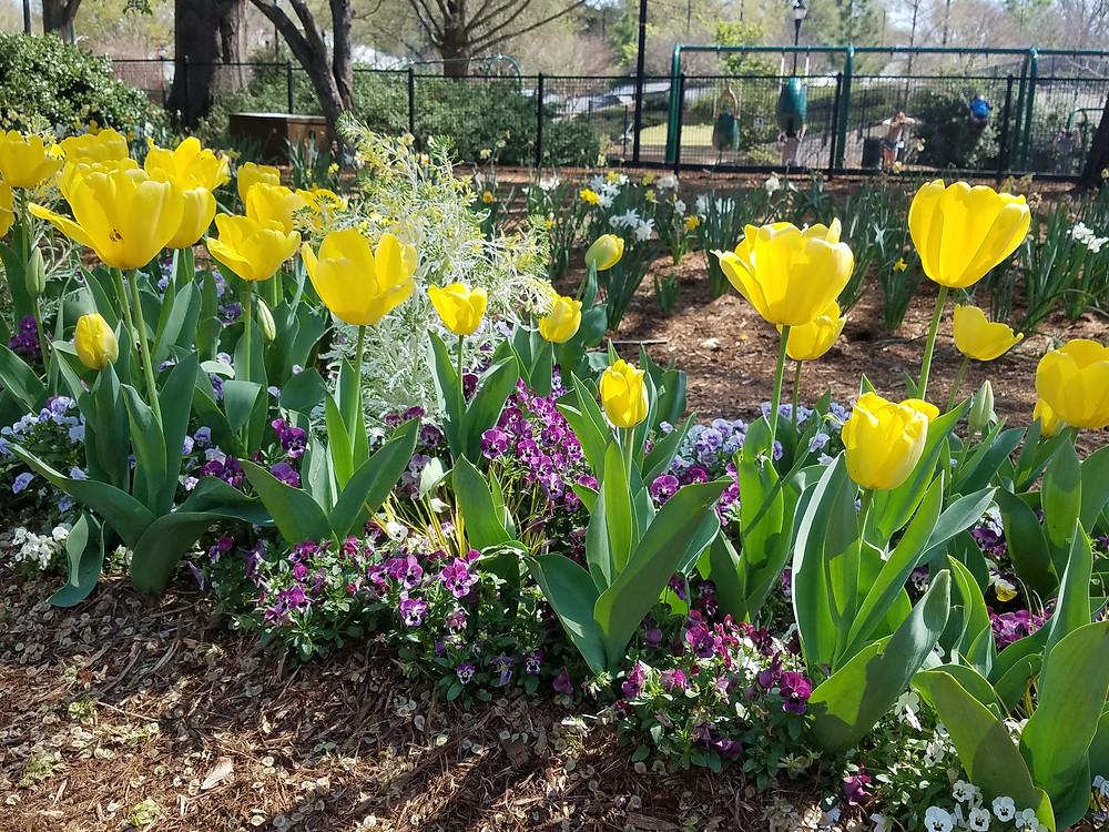 Spring blooms at Pullen Park