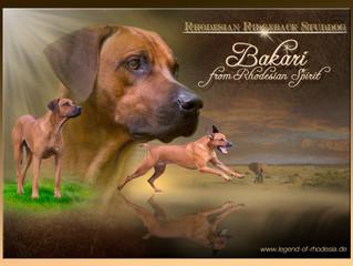 unser Bakari erhält eine eigene Collage