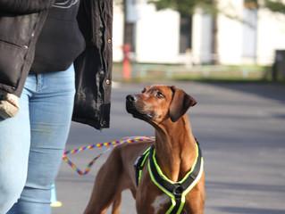 Hundetraining bei Hund im Sinn