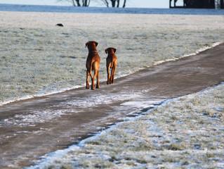 Winterspaziergang bei frostigen minus 14 Grad