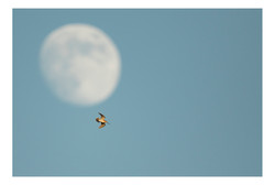 snipe and moon insta