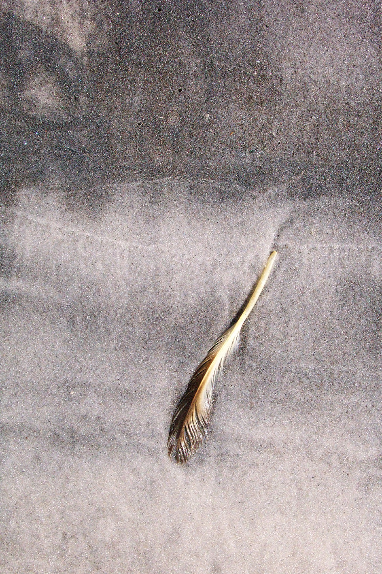 Feather on Oily Sand