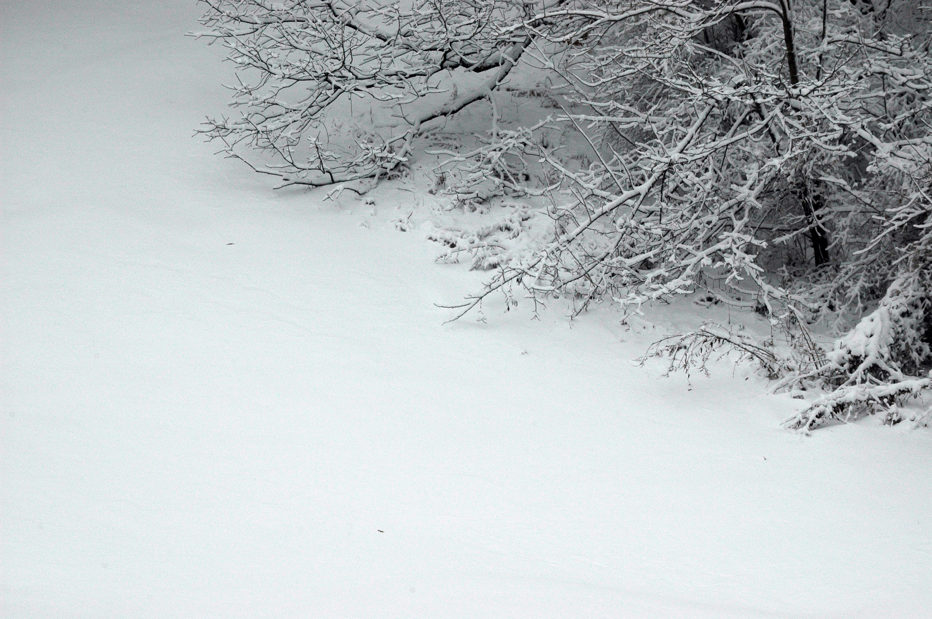 Drifting Snow Against Tree
