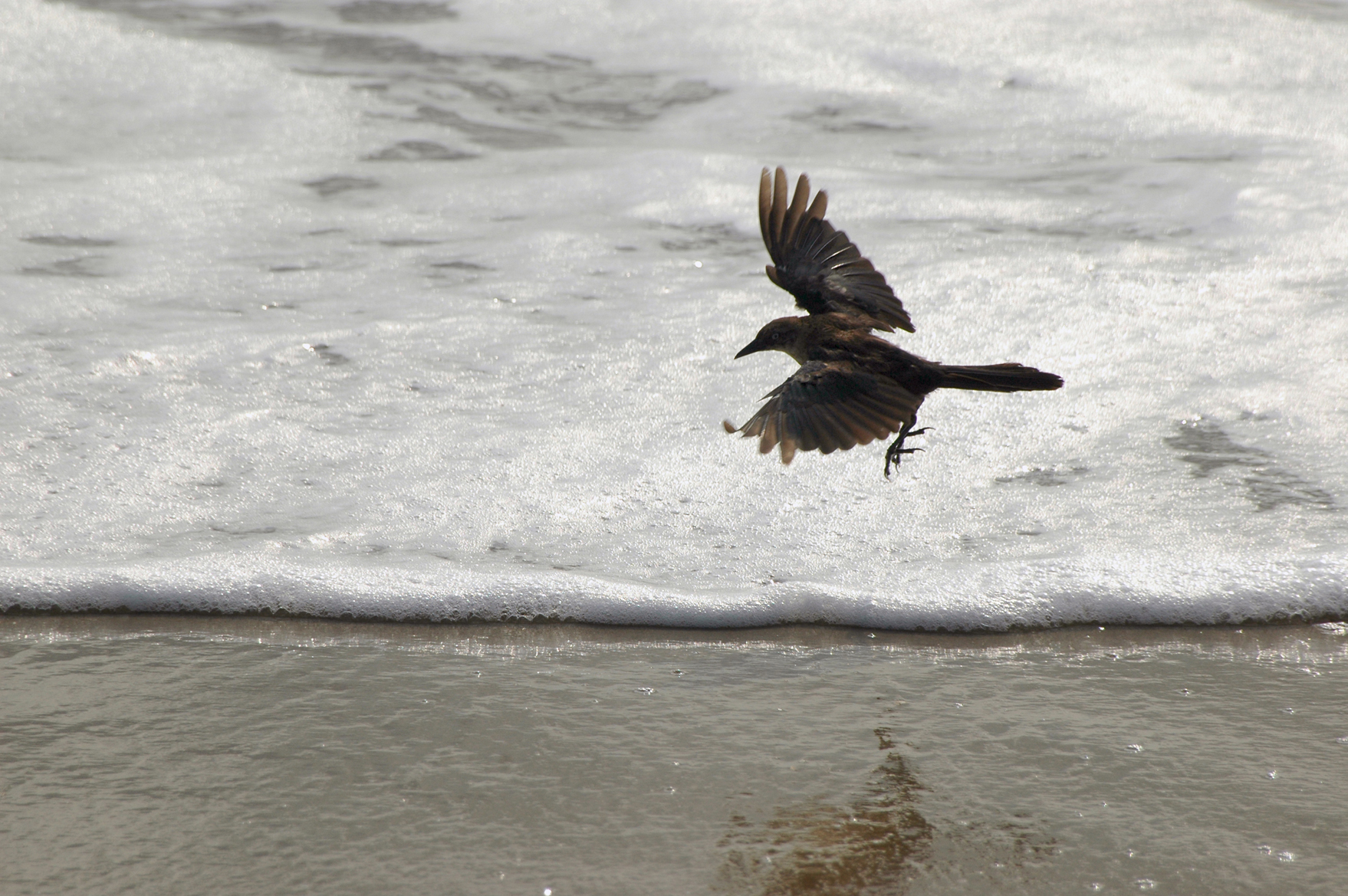 Black Bird at the Shoreline