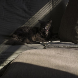 Cat Grooming in the Sunlight