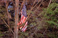 US Flag Up a Tree